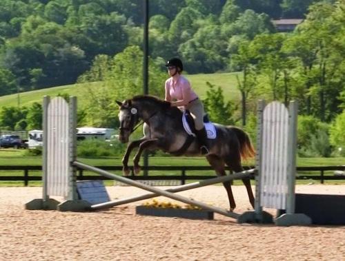 appaloosa mare jumping