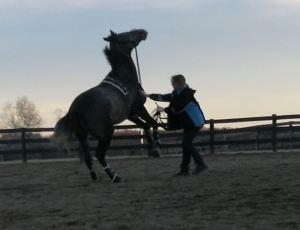 ACK crazy mare too close!