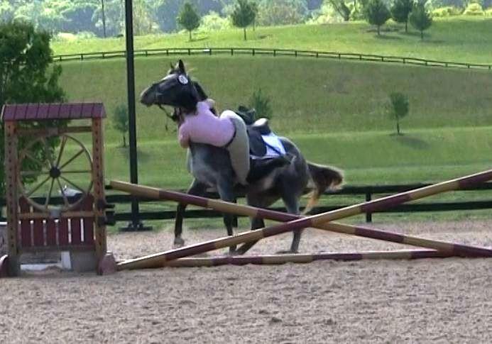 appaloosa mare refusing a jump