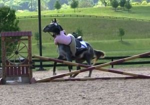 appaloosa mare refusing a jump