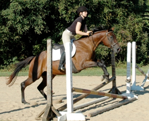 thoroughbred mare jumping