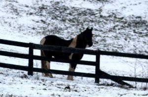 black paint mare