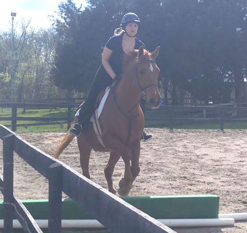 chestnut gelding box jump
