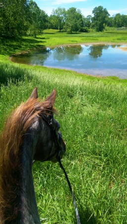 Trail Ride – State Arboretum of Virginia