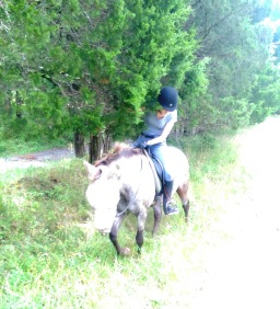 Horse Blogging Trail Ride: The Attack of the Evergreen Tree