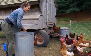 THE CHICKENS HUNGER